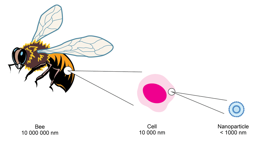A diagram illustrating that nanoparticles are extremely small and cannot be seen by the naked eye. A bee, for instance, is 10,000,000 nanometres long. An individual cell has a diameter of 10,000 nanometres. In contrast, a nanoparticle has a diameter of just 1,000 nanometers.