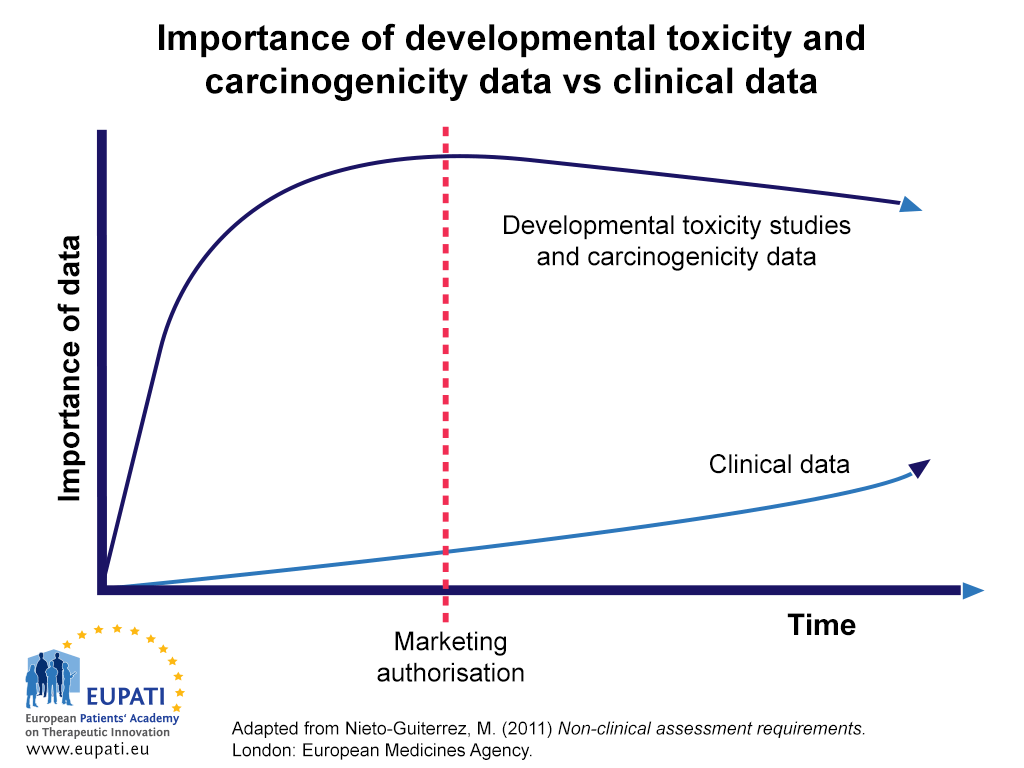 A graphical illustration of the importance of and reliance on data from non-clinical developmental toxicity and genotoxicity studies for the assessment of human safety relative to that gathered in clinical trials over time. Time is marked on the X-axis; importance to human safety assessments on the Y-axis. The time of marketing authorisation is marked approximately half-way along the X-axis. Although the importance of non-clinical developmental toxicity and carcinogenicity remains more important than clinical data throughout the developmental process and beyond the point of marketing authorisation, clinical data does begin to grow in importance gradually even as the importance of non-clinical data begins to fall off.